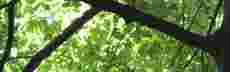 Blaetterkreuz mini
